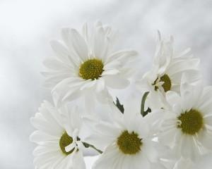 white-on-white-daisys-katie-abrams