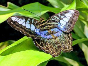 transformation Gaia's light